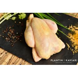 "Yellow Chicken ""la Mere Soulard"""