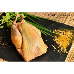 Farmed Guinea Fowl