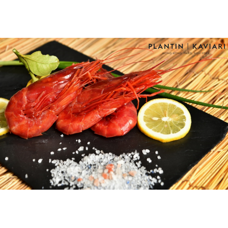 Carabineros (Spanish red prawns)