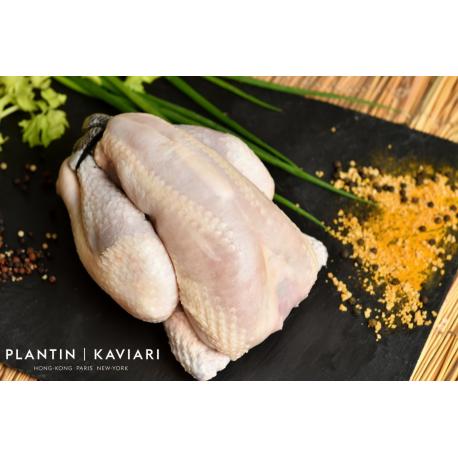 Black Farmed Chicken (frozen)