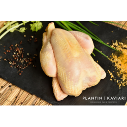 Farmed Yellow Chicken - Frozen