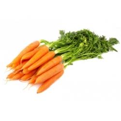 Fane Carrot