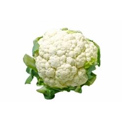 Cauliflower White