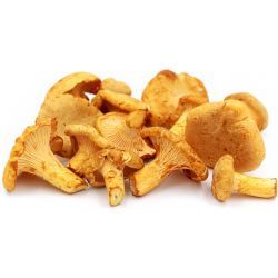 Yellow Chanterelles